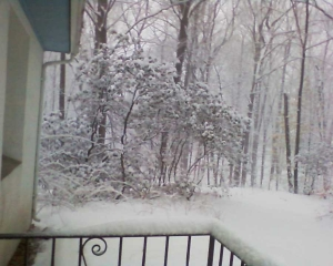 Back Yard in Connecticut...Courtesy, Paige R. Gowans